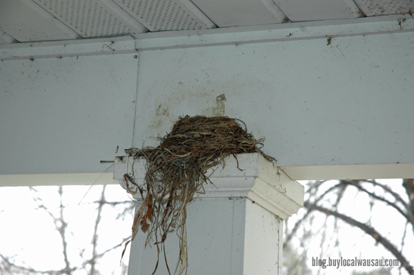 Robin nest relylocal wausau