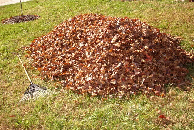 Wausau area yard waste and leaf collection schedules