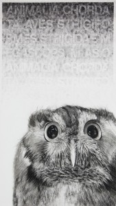 Karen Bondarchuk, My name is Hubert and I am not an owl, 2011, charcoal and fingerprinted ink on Hahnemuele paper