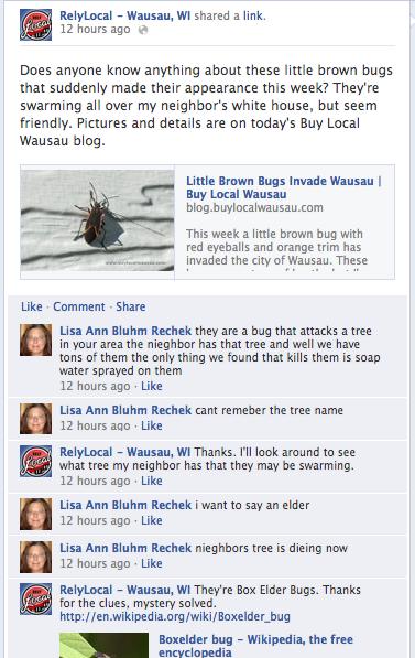Box Elder Bug Mystery Solved