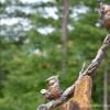 Woodson-Art-Museum-Birds-FB